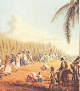 Slaves Cutting Sugar Cane