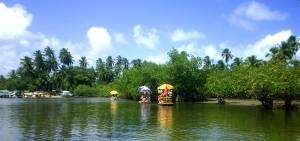 maracaipe-mangroves