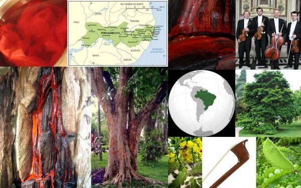 Pau Brasil Collage